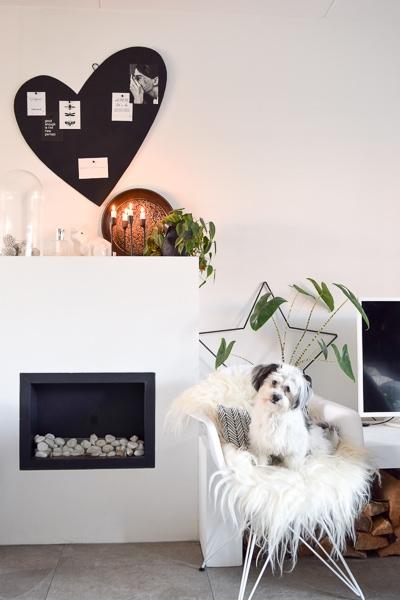 Lampe Berger vieze hond