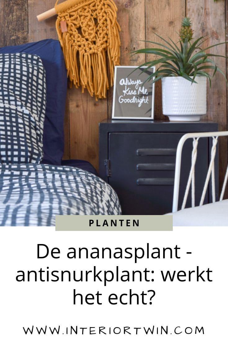 de ananasplant - anti snurkplant werkt het echt?