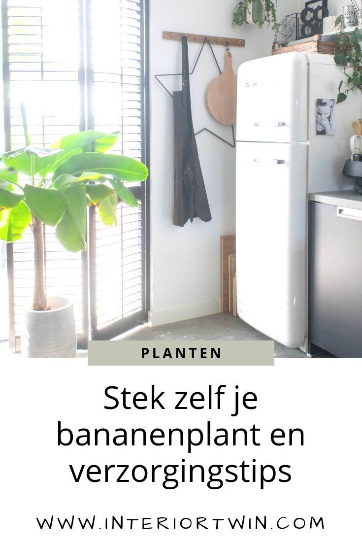 stek zelf je bananenplant en verzorgingstips