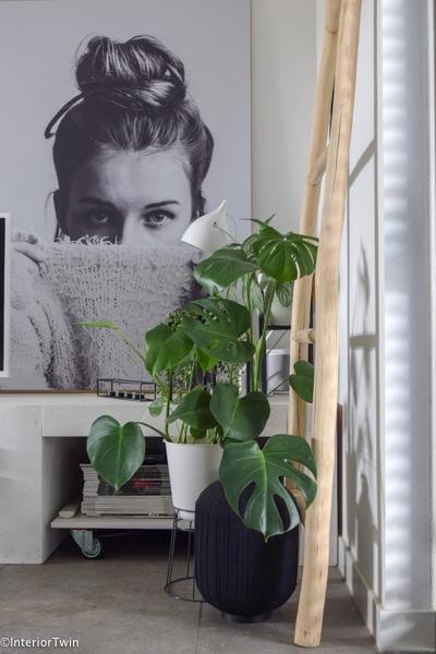 planten bij tvmeubel