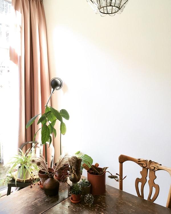 planten op eettafel