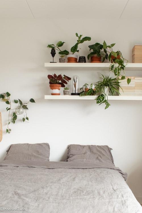 planten potten op plank