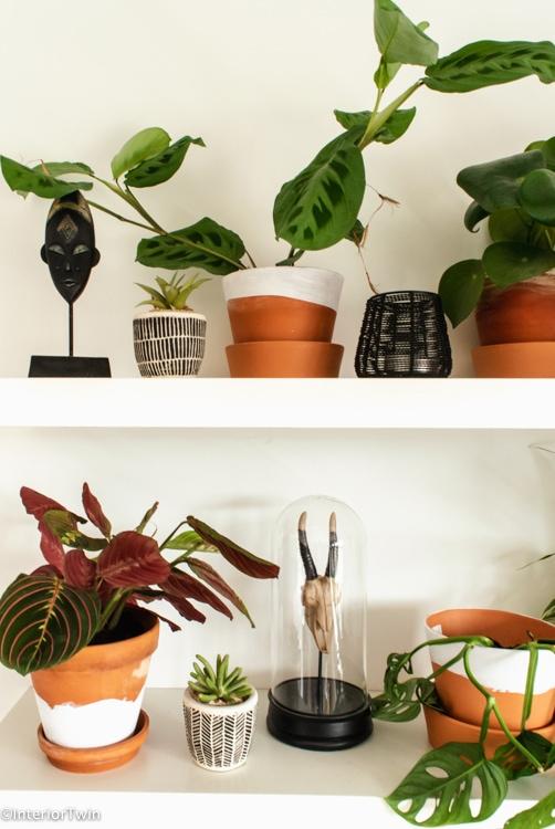 planten shelfie detail_