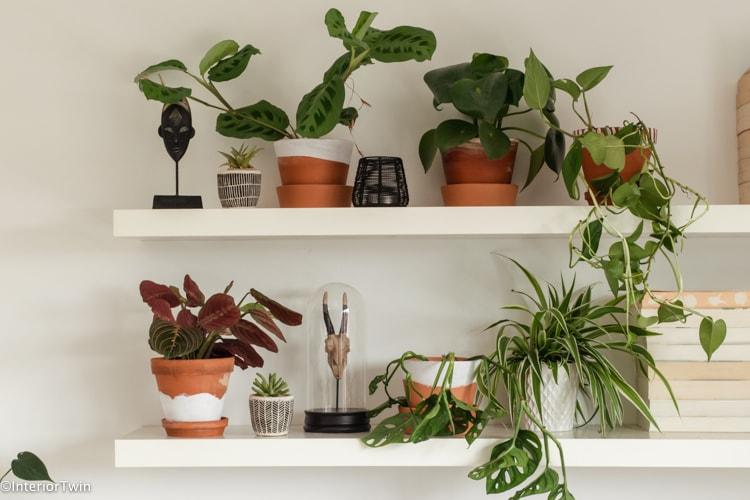 planten shelfie met terracotta potten