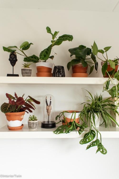 planten shelfie