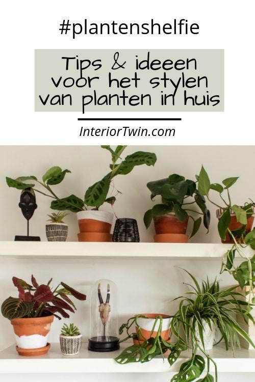 tips en ideeen voor het stylen van planten in huis