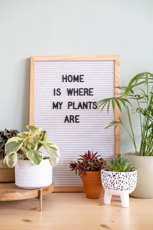 teksten quotes letterbord planten urban jungle