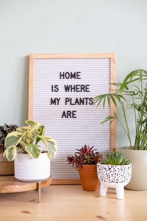 teksten quotes letterbord planten urban jungle