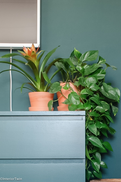 bromelia bloeiende kamerplant