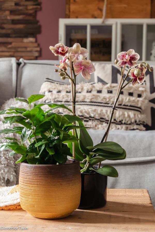 orchidee verschillende kleuren