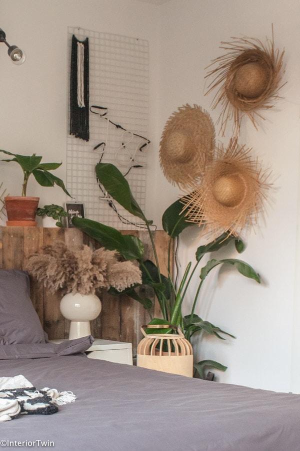 grote kamerplant strelitzia