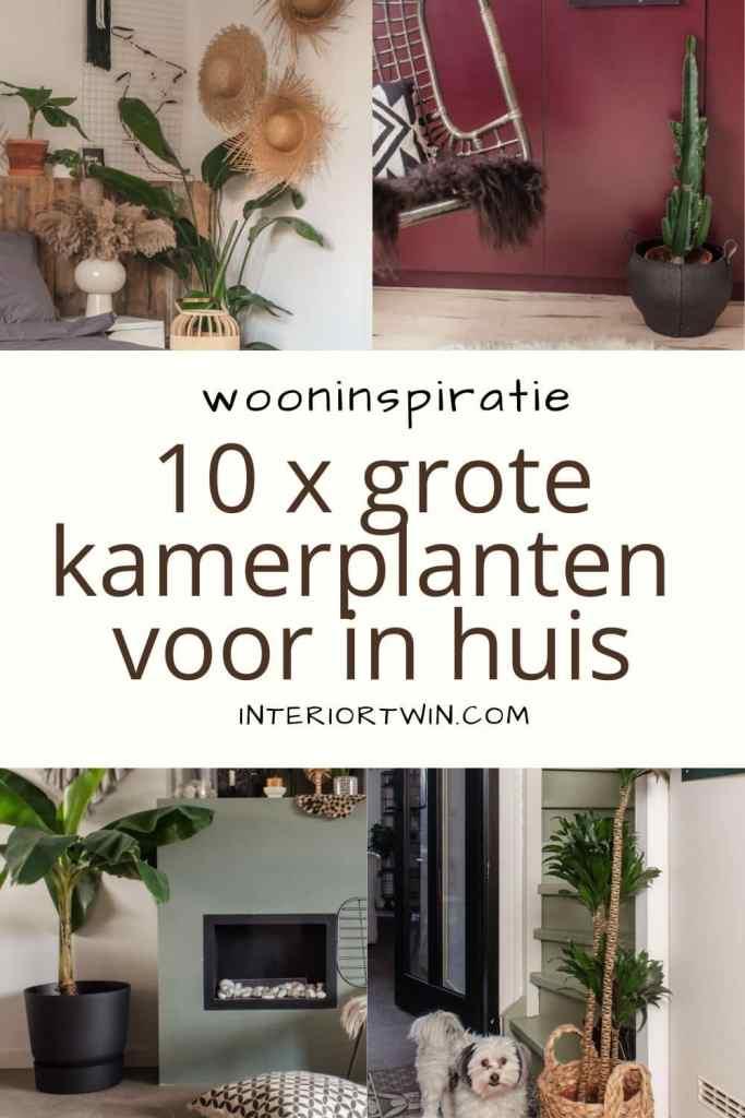 top 10 grote kamerplanten in huis