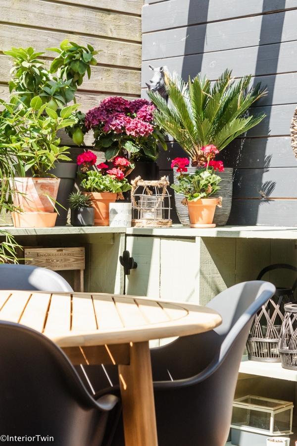 planten en bloemen plantenbakken buiten