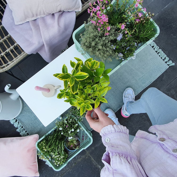 planten in tuin @mijnhuisje_