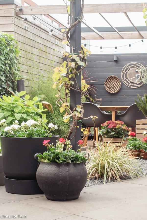 planten voor plantenbakken tuin