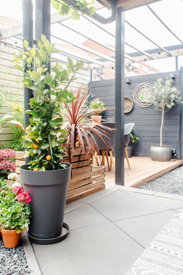 tropische planten in plantenpotten