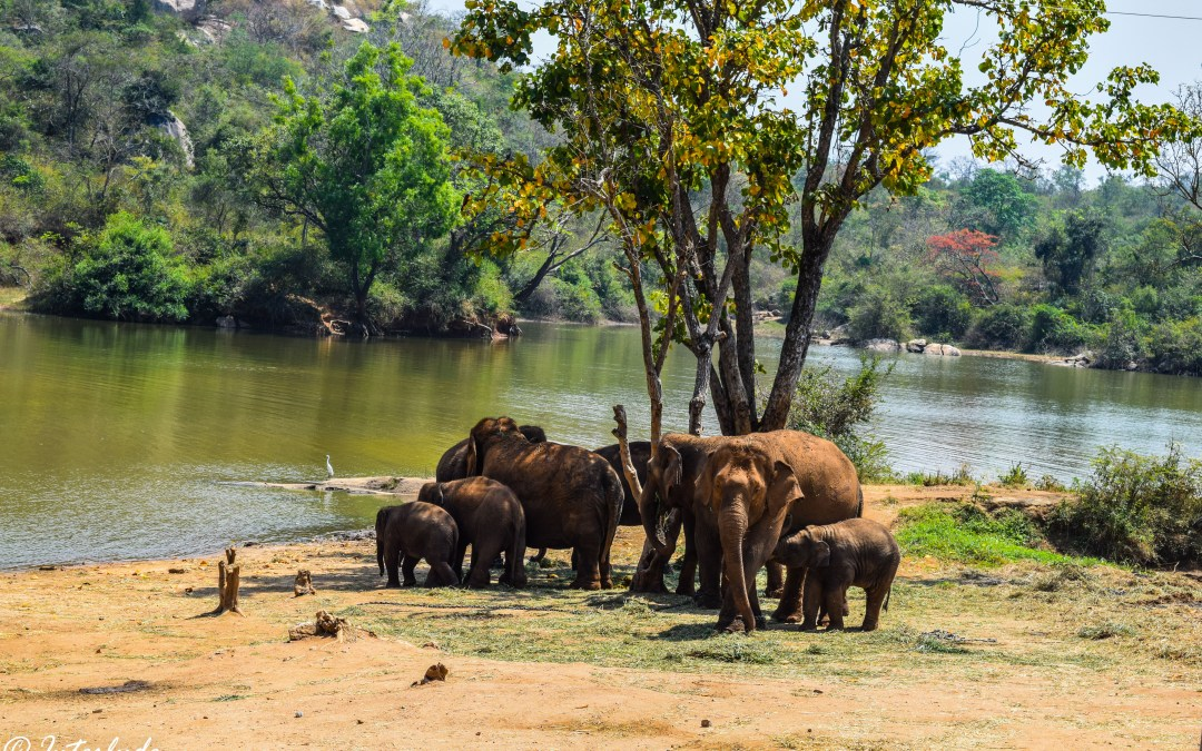 Postcards from Bannerghatta National Park..