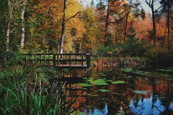 A small lake in the woods surrounded by the warm colors of the changing season