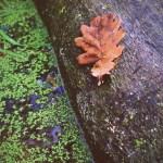 Leaf on a log
