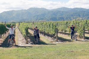 wine tours by bike