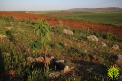 Images from the Make Rojava Green Again Campaign for April 2018