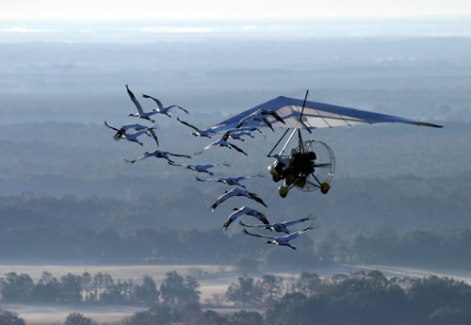 201011-operation-migration-flight
