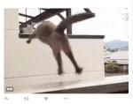 Un gato japonés sorprende con su salto al vacío