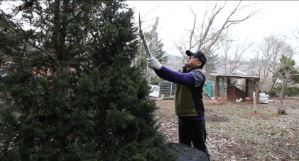 Choi snipping branches on his land.