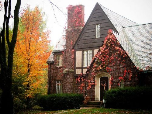 Natural Colors of Foliage in the fall