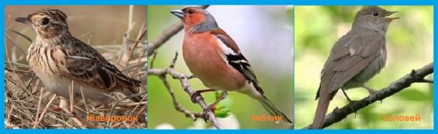 Весеннее пение птиц