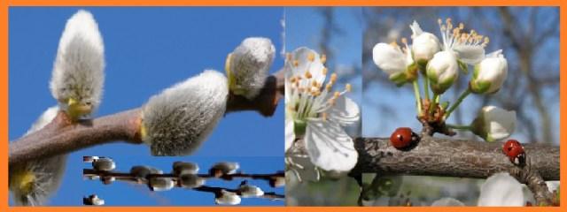Весна - фото и картинки природы