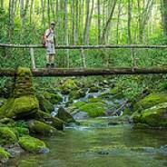 2nd Foot Log Bridge