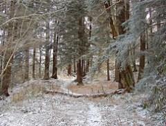Buckeye Gap Trail