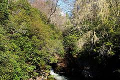 Norton Mills Creek