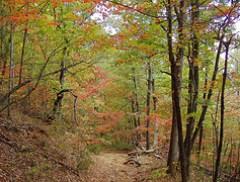 Rumbling Bald Mountain Trail