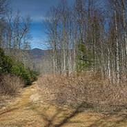 Sassafras Knob from Long Branch Trail