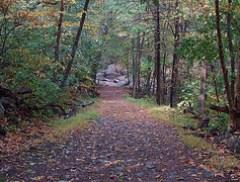 Whiteoak Creek and Horse Trail