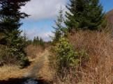 Flat Laurel Trail
