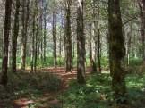 Macs Gap Trail