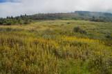 Sam Knob meadow