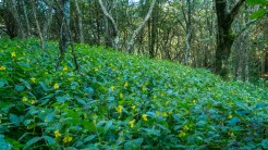 Field of jewelweed