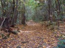 Trail at Montreat