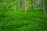 Ferns forever
