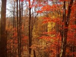 Along Pounding Mill Trail