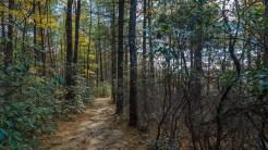 North Cedar Rock Trail