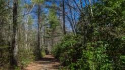 Bikes on Little River Trail
