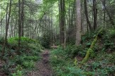 Levee alongside the trail