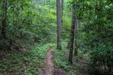Fern lined trail