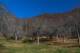 Honey Bear Orchard