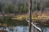 Abandoned beaver pond